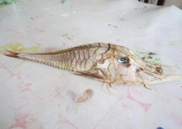 """Уловом рыбака заинтересовались специалисты из """"Саравакской лесной корпорации"""", но они до сих пор не определили, что же это такое."""