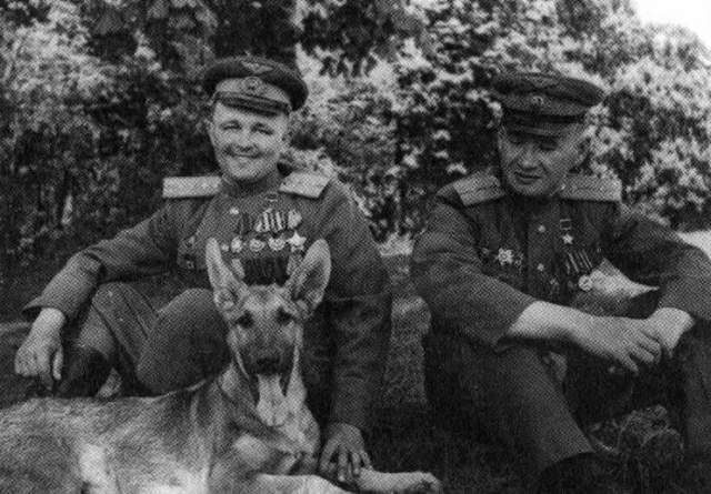 Во время Второй мировой войны большую помощь советским саперам оказывали дрессированные собаки. Пес по кличке Джульбарс за последний год войны нашел 7468 мин и более 150 снарядов. Незадолго до Парада Победы Джульбарс был ранен и не мог пройти в строю, но сам Сталин приказал нести его по Красной площади на собственной шинели.