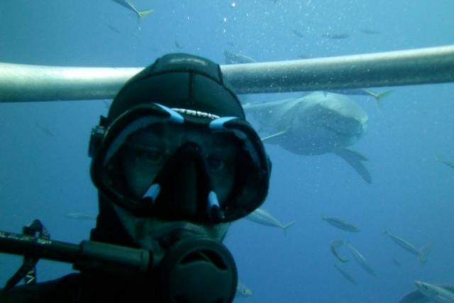 Селфи с акулами довольно распространенное явление, но от этого не менее опасное.