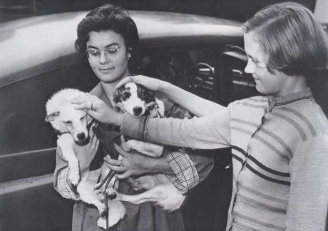 Дальнейшая жизнь Белки и Стрелки прошла в вольере Института авиационной и космической медицины. При этом их возили на показ в детские сады, школы и детские дома. Собаки дожили до глубокой старости и умерли своей смертью.