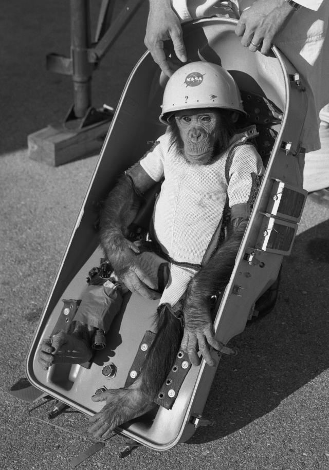 Полет Хэма был предпоследней репетицией перед первым суборбитальным полетом американского астронавта в космос.
