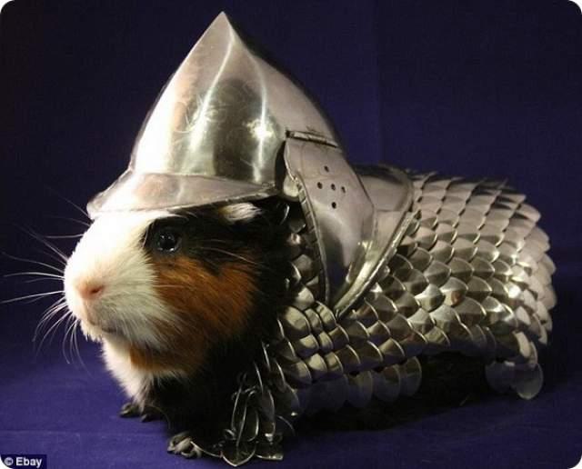 """Рыцарские доспехи для морской свинки принесли своему обладателю 1150$ в 2013 году. Создатель пообещал, что крошечный костюм ручной работы (в комплекте со специальным шлемом) """"будет защищать морскую свинку в любых непредвиденных ситуациях""""."""