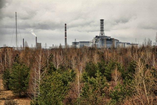 Самая опасная зона в Чернобыле - так называемый Рыжий лес, на который выпало наибольшее количество радиоактивных осадков. Именно там наблюдались самые сильные мутации среди животного и растительного мира.