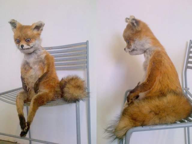 Упоротый лис . Неудачная работа чучельницы Адель Морган. В основном она работала только с мелкими животными, а в 2011 году сделала чучело лиса из тушки животного, попавшего в капкан. В итоге лиса всего перекосило, голова склонилась на бок, а морда выражала абсолютное безумие.