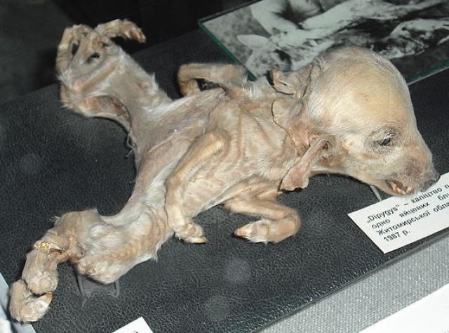 На фото – один из примеров того, что чернобыльская катастрофа сделала с дикой природой близлежащих районов.