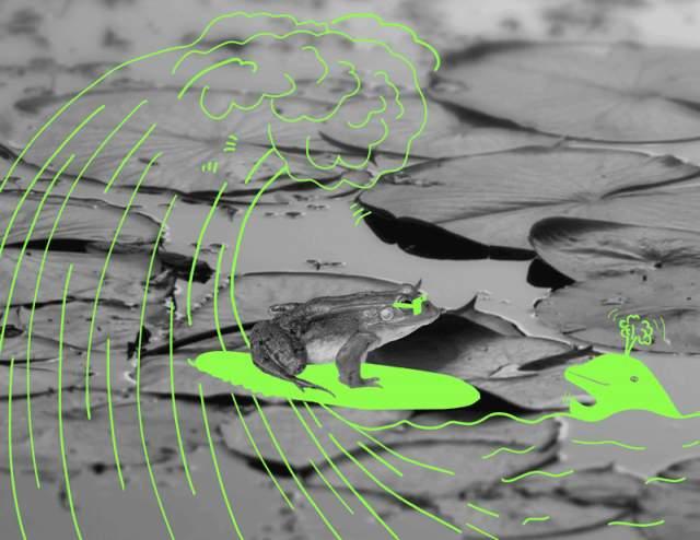 Обе волны, водная и лягушачья, должны были встретиться возле города Вичита около 10 часов утра, и в назначенный час у реки собрались тысячи жителей Канзаса, пожелавшие стать свидетелями беспрецедентного события.Но ни лягушек, ни волны они не дождались: спустя три часа люди разошлись.