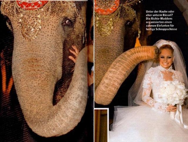 """Появление слона стало для Мэддена настоящим сюрпризом: слон с индийским украшением на голове неожиданно появился в поместье Ричи и, к удивлению жениха подарил Николь свой слоновий """"поцелуй""""."""