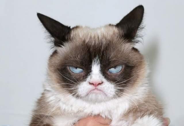 Grumpy cat. Угрюмый кот по имени Соус Тардар явился широкой аудитории в сентябре 2012 года. Его фото выложила хозяйка на сайте Reddit.