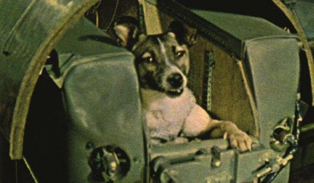 Поэтому эксперимент с Лайкой получился очень коротким: из-за большой площади контейнер быстро перегрелся, и на 4-м витке полета телеметрия о состоянии собаки поступать перестала.