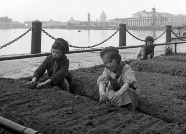 """""""Город изменился. Там, где были газоны, разбили огороды: на Марсовом поле, везде, где только был кусочек земли. Делали грядки и сажали все, что только можно, — и картошку, и морковку, один раз посадили огурцы, а выросли какие-то маленькие арбузики""""."""
