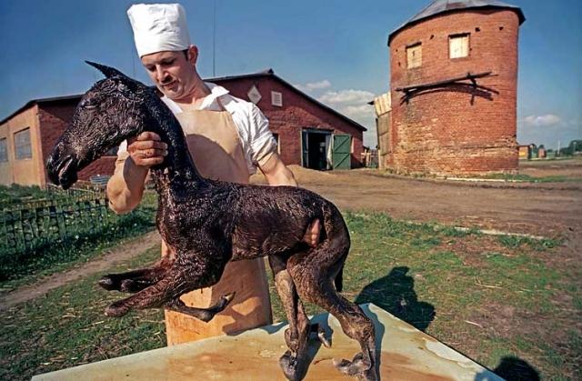 В Житомирской области, особенно сильно затронутой излучением, число животных-мутантов в 1988-1990 годах достигло своего пика.