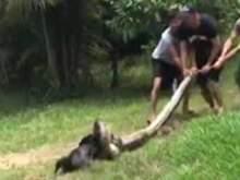 Жители бразильской деревни спасли собаку от анаконды