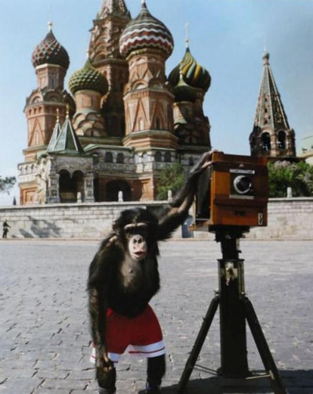 3. Шимпанзе в цирке. На фото - шимпанзе Микки, которого Виталий Комар и Александр Меламид учили делать фотографии на Красной площади.