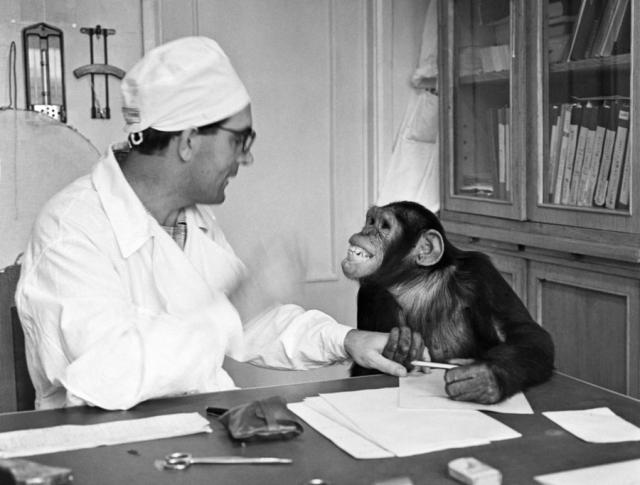 На дело своей жизни - получение гибрида человека и обезьяны, он фактически вымогал деньги у наркома просвещения, указывая на то, что если средств ему не дадут, Советский Союз в этой области опередят западные державы.