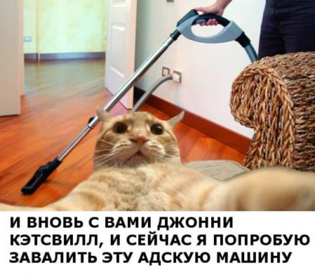 На некоторое время, до января 2014 года, никто не обращал внимания на Кэтсвилла, пока в Рунете не подхватили этот мем.