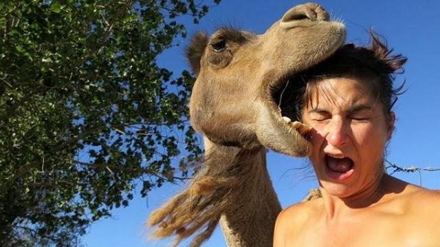 Интернет-пользователь по имени Джастин просто решил сделать селфи на фоне верблюда. В итоге - несколько швов и испуг.