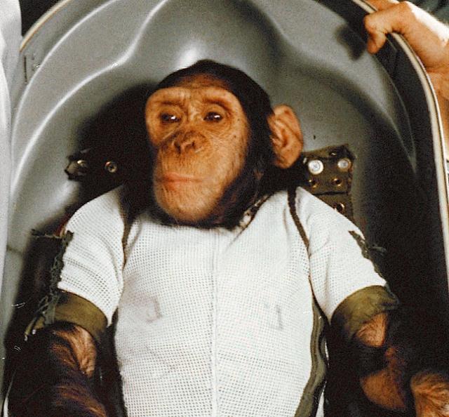 Шимпанзе Хэм , запущенный в январе 1961 года также в США.