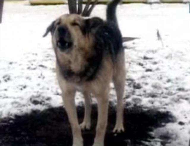 Жертвой оказался дворник Мадатов, который в тот день помогал актеру похоронить его любимую собачку Фросю, умершую накануне.
