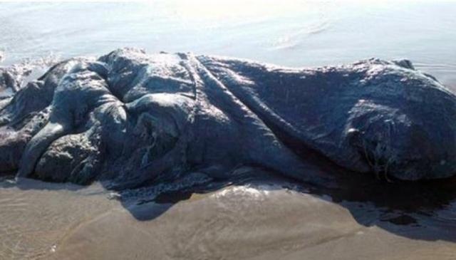 Этого четырехметрового морского монстра вынесло на берег в Мексике. Жители нашли его на пляже Бонфил-Бич в городе Акапулько.