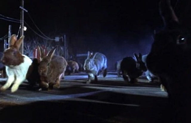 """Кролики-мутанты из фильма """"Ночь зайца"""" (1972). Гигантские кролики, набросившиеся на маленький американский городок, что может быть страшнее."""